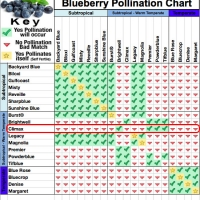 Climax Blueberry Pollination Chart