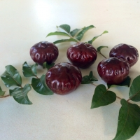 Burdekin Plum fruit By DaleysFruit.com.au [All Rights Reserved]