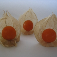 Cape Gooseberry By DaleysFruit.com.au [All Rights Reserved]