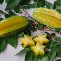 Carambola Kary By DaleysFruit.com.au [All Rights Reserved]