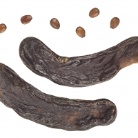 The Pods seeds and fruit of the carob fruit tree  [CC BY-SA 3.0 (https://creativecommons.org/licenses/by-sa/3.0)], from Wikimedia Commons