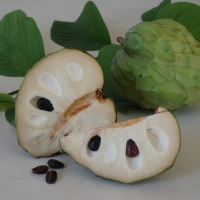 Cherimoya white By DaleysFruit.com.au [All Rights Reserved]