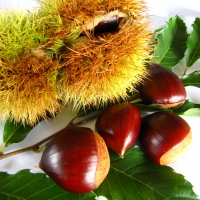 chestnut fruit By DaleysFruit.com.au [All Rights Reserved]