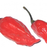 Chilli Ghost Pepper Whole Chili and Cut in Half Chili Modified Image By Gannon anjo at English Wikipedia (Transferred from en.wikipedia to Commons.) [Public domain], via Wikimedia Commons
