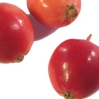 Crab Apples growing only 2.5cm - 3cm By Coosemans L.A. Shipping [Used by Permission, (www.weshipproduce.com)]