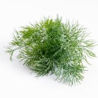 Dill Herb By Suetot [CC0 1.0 (https://creativecommons.org/publicdomain/mark/1.0/)]