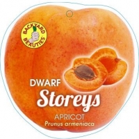 Pictorial Label for Dwarf Storeys Apricot By JFT Nurseries [All Rights Reserved, Supplier of DaleysFruit.com.au]