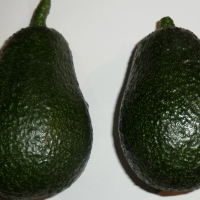 Lamb Hass Avocado By MarkMelb on Daleys Fruit Tree Forum  [All Rights Reserved, Used By Permission]