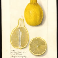 Lemon Lisbon compliments of getty images