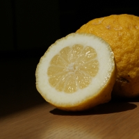 Lisbon Lemon Fruit Cut Open By Marijke Blazer [CC BY 2.0 (https://creativecommons.org/licenses/by/2.0/)] via Flickr via flickr https://flic.kr/p/7u9kc8