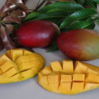 Palmer mango fruit By DaleysFruit.com.au [All Rights Reserved]
