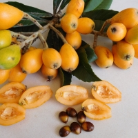 Nagasakiwase loquat fruit By DaleysFruit.com.au [All Rights Reserved]