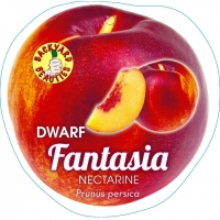 Nectarine Fantasia By PlantNet [All Rights Reserved, Supplier of DaleysFruit.com.au]