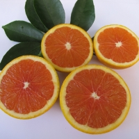 Orange Cara Cara By DaleysFruit.com.au [All Rights Reserved]