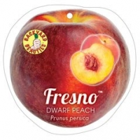 Dwarf Peach Fresno label Backyard beauties