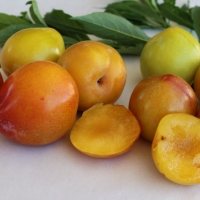 Plum -- Gulf Gold By DaleysFruit.com.au [All Rights Reserved]