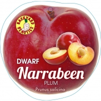 Dwarf Plum Narrabeen By PlantNet [All Rights Reserved, Supplier of DaleysFruit.com.au]