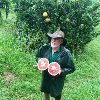 Carters Red Pummelo Pomelo taken by Greg Daley of https://www.daleysfruit.com.au at Fruit Forest Farm Visit By DaleysFruit.com.au [All Rights Reserved]