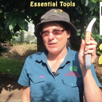 Dwarfing Tool for Cincturing or Girdling Fruit Trees