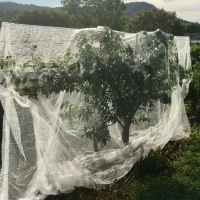 Total Exclusion Net over Plum Tree