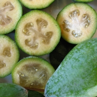 Feijoa Fruit By DaleysFruit.com.au [All Rights Reserved]
