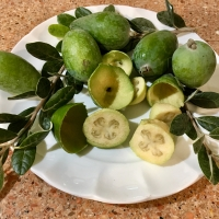 Feijoa Apolla Fruit