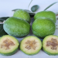 Feijoa Duffy By DaleysFruit.com.au [All Rights Reserved]