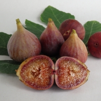Fig+-+Brown+Turkey