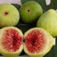 Fig - Picone By DaleysFruit.com.au [All Rights Reserved]