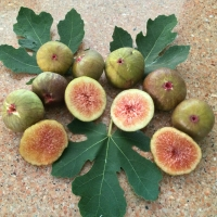 Fig - Prestons prolific By DaleysFruit.com.au [All Rights Reserved]