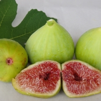 Fig - White Adraitic By DaleysFruit.com.au [All Rights Reserved]