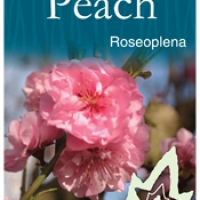 Roseoplena Flowering Peach  By JFT Nurseries [All Rights Reserved, Supplier of DaleysFruit.com.au]