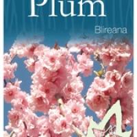 Flowering Plum Blireana By JFT Nurseries [Supplier of DaleysFruit.com.au]