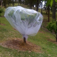 Fruit Saver Net over Apricot Compliments gardensonline