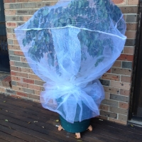 Fruit Saver Fruit Fly Net Small By Fruit Tree Nets [Supplier of DaleysFruit.com.au]