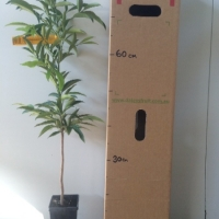 Glossy Laurel For Sale Mega Tube