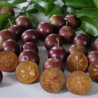 Governors plum fruit