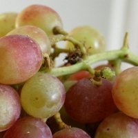 Pink Grapes By Till Westermayer [CC BY-SA 2.0 (https://creativecommons.org/licenses/by-sa/2.0/)] Cropped from original Photo From Flickr https://flic.kr/p/goGDz3