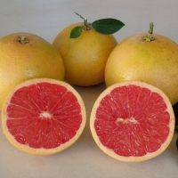 Grapefruit Rio Red By DaleysFruit.com.au [All Rights Reserved]