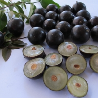 Jaboticaba - Large Leaf By DaleysFruit.com.au [All Rights Reserved]