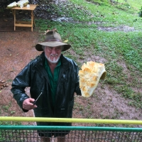 Opening a Jackfruit Picture taken by Greg Daley of https://www.daleysfruit.com.au at Fruit Forest Farm North QLD