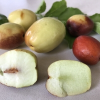 Jujube - Li fruit