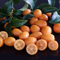 Kumquat Nagami By DaleysFruit.com.au [All Rights Reserved]