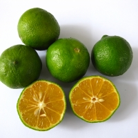 Lime - Kassia By DaleysFruit.com.au [All Rights Reserved]