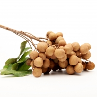 Longan Dimocarpus longan By Bigtreegroup [CC0 1.0 (https://creativecommons.org/publicdomain/zero/1.0/deed.en)] From Pixabay