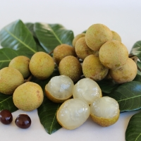 Longan Kohala fruit By DaleysFruit.com.au [All Rights Reserved]