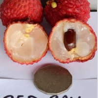 Lychee Red ball variety showing flesh seed and size comparission By Australian Lychee Growers Association (ALGA) [All Rights Reserved, Used By Permission] From http://www.australianlychee.com.au/about-lychees/varieties