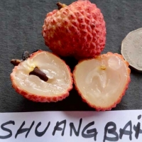 Shuang Balia lychee Fruit By Australian Lychee Growers Association (ALGA) [All Rights Reserved, Used By Permission] From http://www.australianlychee.com.au/about-lychees/varieties
