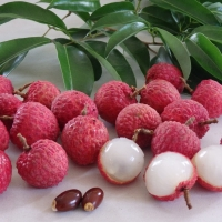 Lychee Wai Chi By DaleysFruit.com.au [All Rights Reserved]