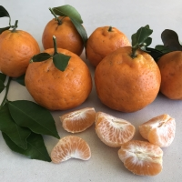 Mandarin Emperor Fruit By DaleysFruit.com.au [All Rights Reserved]